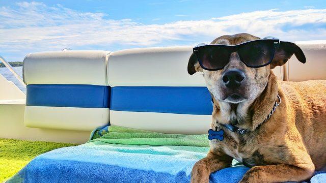 Coolな犬